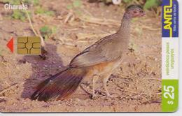 URUGUAY PHONECARD ANTEL(chip) BIRDS-Tc 115a-3/00-200000pcs-USED(bx1) - Galline & Gallinaceo