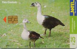 URUGUAY PHONECARD ANTEL(chip) BIRDS-Tc 114a-3/00-200000pcs-USED(bx1) - Galline & Gallinaceo