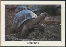 °°° GF41 - ZANZIBAR - TORTOISE , PRISON ISLAND °°° - Cartoline