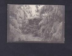 Photo Originale Guerre 14-18 Tannenwald Foret De Sapins Près De St Stail En 1916 - Oorlog, Militair