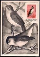 C.M. 4 Fauvette à Tête Noire   ALBANIE - Sperlingsvögel & Singvögel
