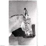 HLVTP7354CPA-LFTMD6996TABU.Tarjeta Postal DE HUELVA.Animal,BURRO PLATERO En PALOS DE MOGUER - Burros