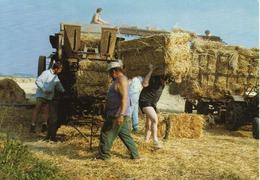 BATTAGE DU BLE EN FAMILLE CHEZ M.GOMBERT - 08/1991 - M92051 - 300EX - Bauern