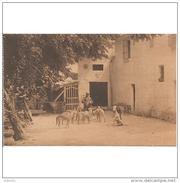 CDBTP5591-LFTD5997TAPERR.Tarjeta Postal DE CORDOBA.Molino De Doña Mencia Y REHALA DEL MARQUES DE VIANA En MORATALLA - Perros