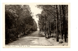 Moliets (Landes) - Route De La Plage (1949) - Dax