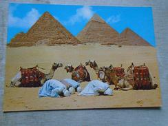 D148287 Egypt - Pyramids Giza -Prayers - Camels - La Priere Pres Des Pyramides- Chameaux - Piramidi