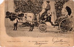 """ATTELAGE """"nouveau Siècle"""" Vache - Belle Carte Postée - Rare - Manque Coin Avant Gauche - Précurseur - Cows"""