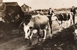 Finlande Bombardements Russes Paysans Quittant Leur Village WWII WW2 Ancienne Photo 1941