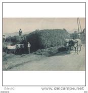 VCYTPA3749CPA-LFTMD11430TAGRA.Tarjeta Postal De VIZCAYA.Bueyes,agricultores,carreta De Heno.PAIS VASCO - Granja