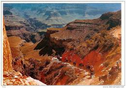 GRAND CANYON NATIONAL PARK Mules Carry Sightseers - Grand Canyon