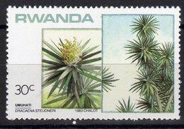 Rwanda 1983 Alberi Vegetazione Dracaena Steudneri - Vegetazione