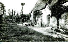 N°53135 -cpsm L'habitat Rural- - Fermes