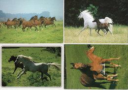 4 Cartes - Chevaux - Flammes (96172) - Pferde