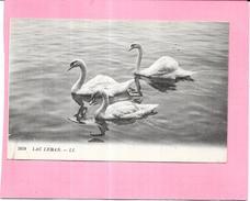 SUISSE  -  Trois Cygnes Sur Le Lac Leman  - ENCH - - GE Geneva