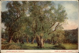 ARBRES - OLIVIERS - GRECE - Forêt D'oliviers - Other
