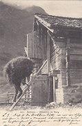 Heuernte Am Berg - Gel. Brünig - 1905       (P38-50221) - Elevage