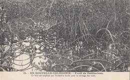 Océanie - Nouvelle-Calédonie - Précurseur - Forêt De Palétuviers - Tannage Cuir - N° 60 - New Caledonia