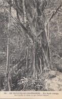 Océanie - Nouvelle-Calédonie - Précurseur - Forêt Vierge Lianes - N° 54 - New Caledonia