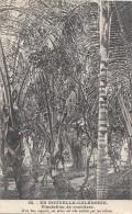 Océanie - Nouvelle-Calédonie - Précurseur - Plantation De Cocotiers - Colons - N° 53 - New Caledonia