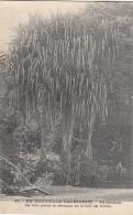 Océanie - Nouvelle-Calédonie - Précurseur -  Arbre Pandanus -  N° 56 - New Caledonia