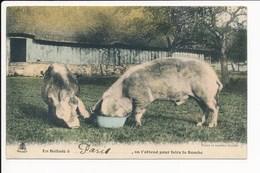 Carte Humoristique  En Ballade à Paris  ( Asnières ) Avec Cochon  ( Recto Verso ) - Cochons