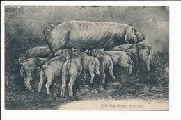 Carte Humoristique  Avec Cochon Une Bonne Nourrice ( V D C ) ( Recto Verso ) - Cochons