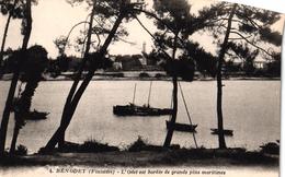 BENODET -29- L'ODET EST BORDEE DE GRANDS PINS MARITIMES - Bénodet