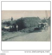 VCYTPA3749CPA-LFTMD11430TANSC.Tarjeta Postal De VIZCAYA.Bueyes,agricultores,carreta De Heno.PAIS VASCO - Animales