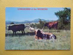 Vue Générale.Les Longues Cornes Des Wichitas. - Etats-Unis