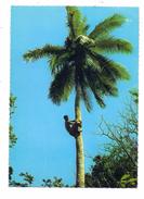 FIJI - Climbing Coconut Tree - Fidschi
