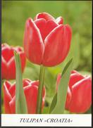 Croatia Zagreb 1993 / Floraart / International Garden Exhibition / Flowers / Tulips - Flowers