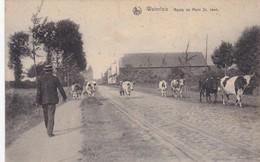 Waterloo - Route De Mont St. Jean - Waterloo