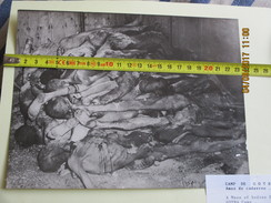 PHOTO  - 1945 -  Camp De CONCENTRATION De GOTHA. - Documents Historiques