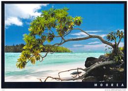 Polynésie Française- Les Iles Du Pacifique Sud -MOOREA Tahinu Arbre Des Plages Coralliennes De Polynésie( CP 059) - Polynésie Française