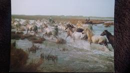 CPM CHEVAL CHEVAUX CAMARGUE MANADE TRAVERSANT LES MARAIS  ED MERIDIONALES - Horses
