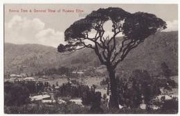 CEYLON, KEENA TREE - NUWARA ELIYA GENERAL VIEW  C1910s-20s Old Postcard - CEYLAN - SRI LANKA - Sri Lanka (Ceylon)