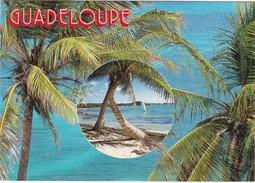 Cartolina - Postcard    -  Guadeloupe - Antilles - French. - Cartoline