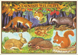 Cornish Wildlifecountryside Illustrated Fox Yellow Nacked Mouse Badger Frog Rabbit Hedgehogs Red Squirrel Animals Forest - Royaume-Uni