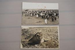 Port Aux Français Iles De Kerguelen éléphant De Mer 1975 - TAAF : Terres Australes Antarctiques Françaises