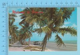 Welcome To Florida  USA  -  2 Scans - Souvenir De...