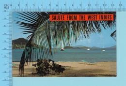Souvenir From The West Indies Carabbean-  2 Scans - Souvenir De...