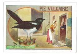 CHROMO IMAGE DOS MUET LA VACHE LA PIE VULGAIRE - Chromos