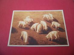 Carte Postale édition L.F.E.  Collection Jeunes Animaux  N° 5 Porcelets Neuve   TB - Autres