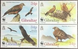 Gibraltar 1996 Endangered Birds MNH - Vögel