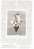 """PHOTOGRAPHIE INSTANTANEES """" Le Chat Emprisonné """" 1890 - Photography"""