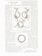 """LA SCIENCE PRATIQUE   """" La Sureté Des Clés  """"    1890 - Sciences & Technique"""