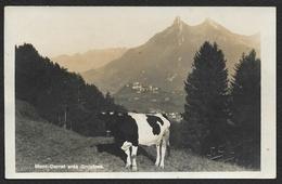 Mont Currat Près Gruyères (Glasson à Bulle) Fribourg Suisse - FR Fribourg