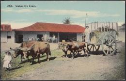 POS-475 CUBA POSTCARD. CIRCA 1910. OX TEAM. YUNTA DE BUEYES. - Cuba