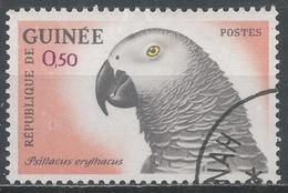 Guinea 1962. Scott #264 (U) Gray Parrot Bird * - Guinée (1958-...)