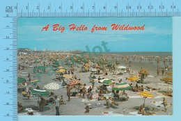 A Big Hello From Wildwood New Jersey USA -  2 Scans - Souvenir De...